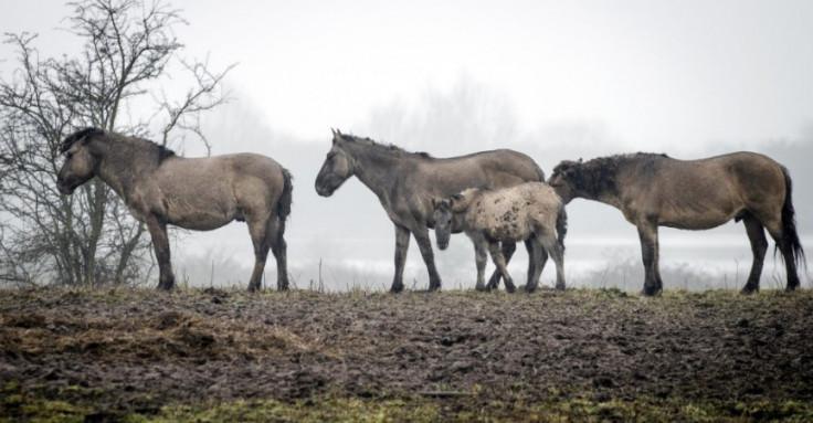 Dva puta po četiri konja u desetak dana su ubijena