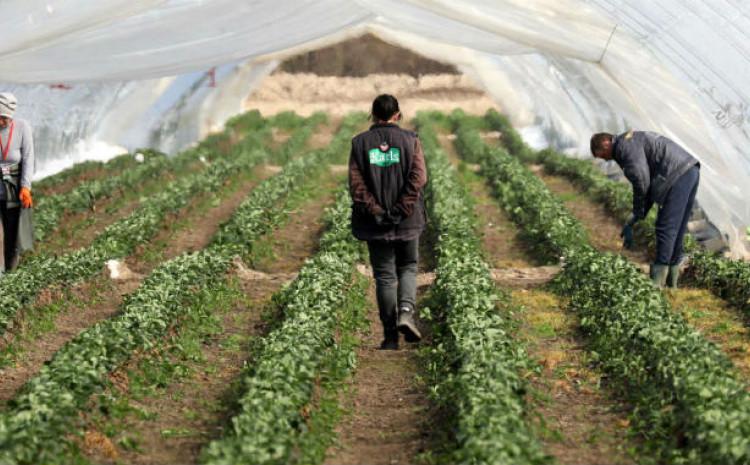 Poljoprivreda pala na nikad niže grane