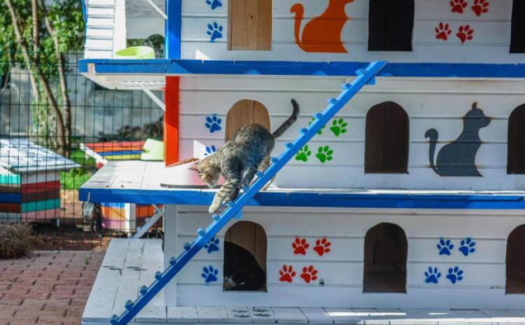 U Antaliji postavljena kućica sa 64 sobe za mačke