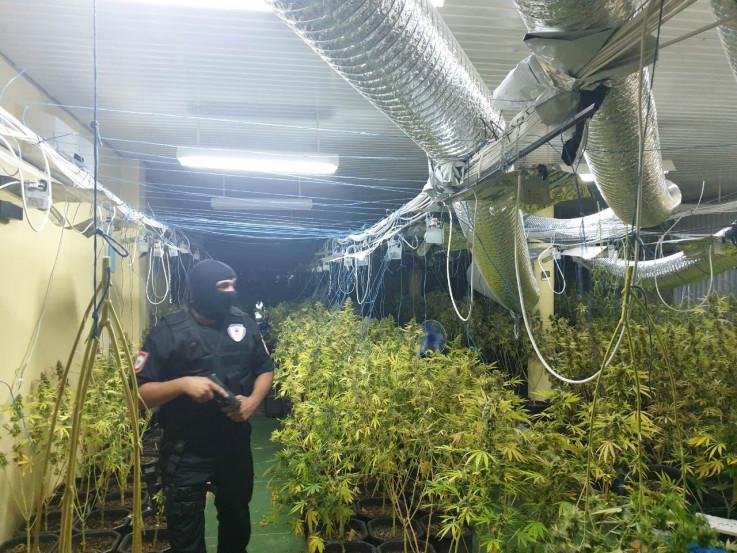 Uzgajali marihuanu u iznajmljenoj hali u Trnu kod Laktaša