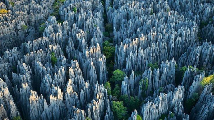 Stjenovita šuma