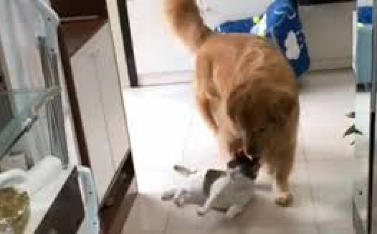 Zbog onoga što je pas napravio neposlušnoj mački snimka je postala hit
