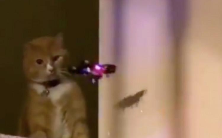 Mački se približio dron, sredila ga je jednim potezom