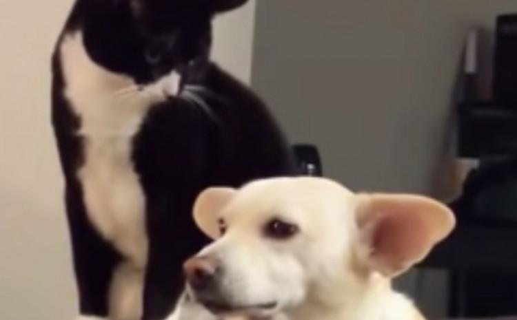 Mačka odlučila napsti psa