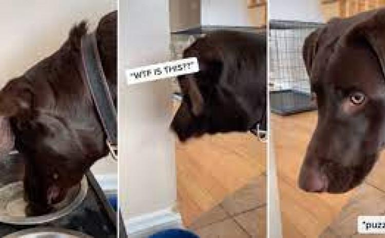 Reakcija psa nasmijala mnoge