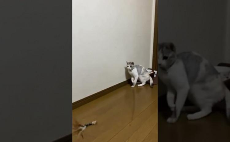 mačka ne poznaje dosadnu