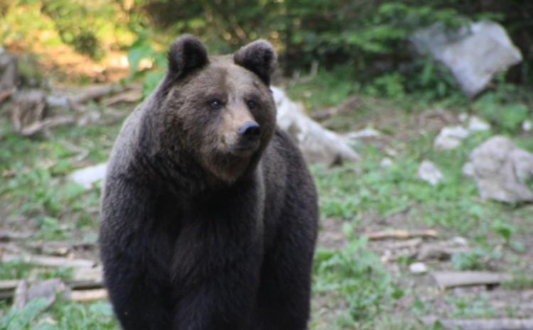 Medvjed često dolazi na imanje