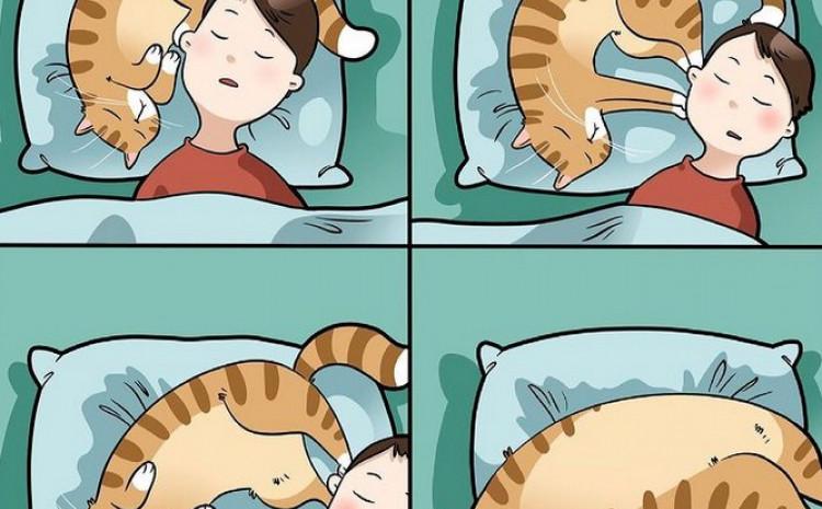 Život s mačkama