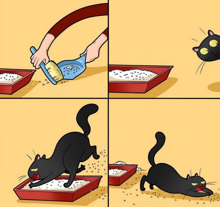 Humor s mačkama