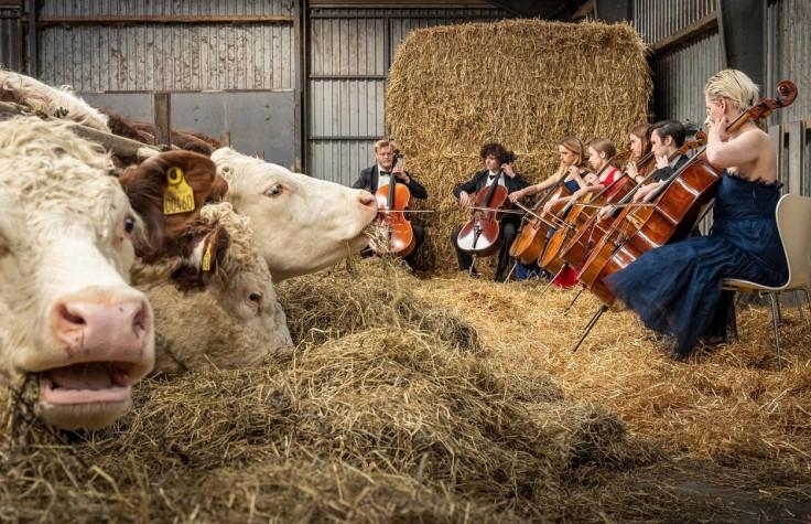Koncerti na farmi započeli su u okviru plana popularizacije muzičke škole