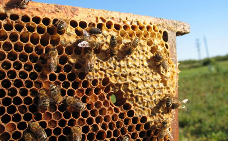 Zašećerena voda kao nagrada za pčele