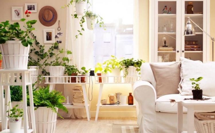 Zelenilo u domu