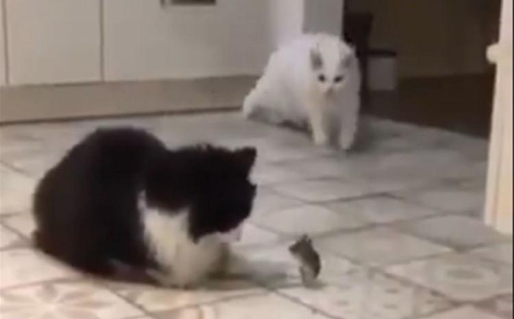 Mačke i miševi su najveći neprijatelji