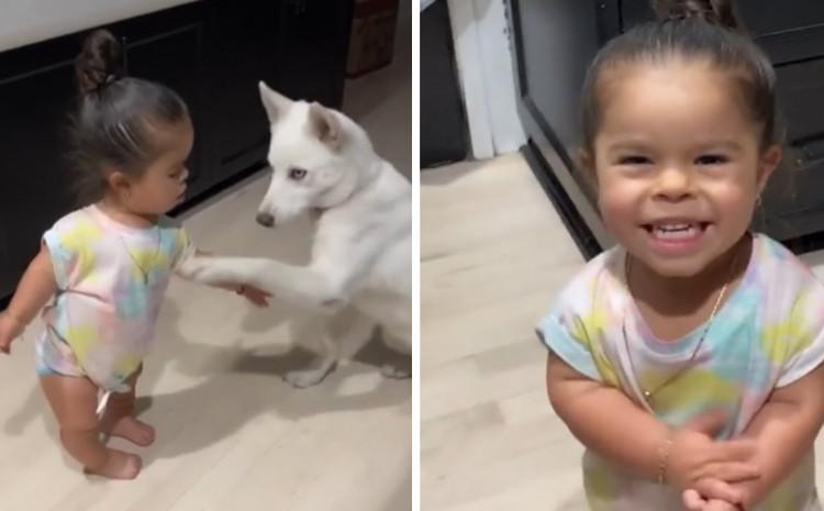 Svako ko je odrastao uz psa zna da je on najbolji prijatelj