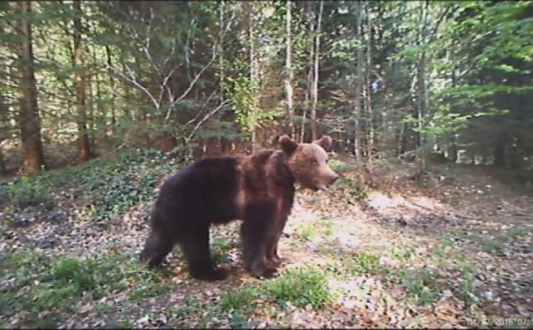 Medvjedi su česta pojava na ovoj planini