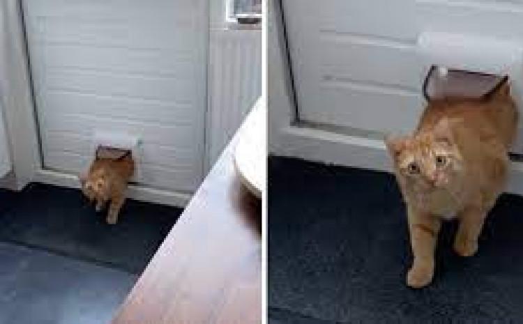 Mačka pogriješila