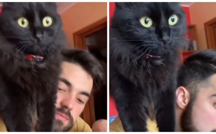 Mačka po imenu Eva ima jednu čudnu naviku