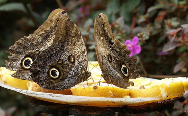 Zemlja obiluje hiljadama vrsta leptira