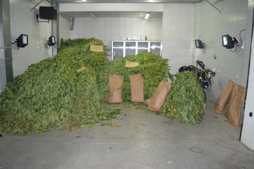 Oduzeta velika količina marihuane