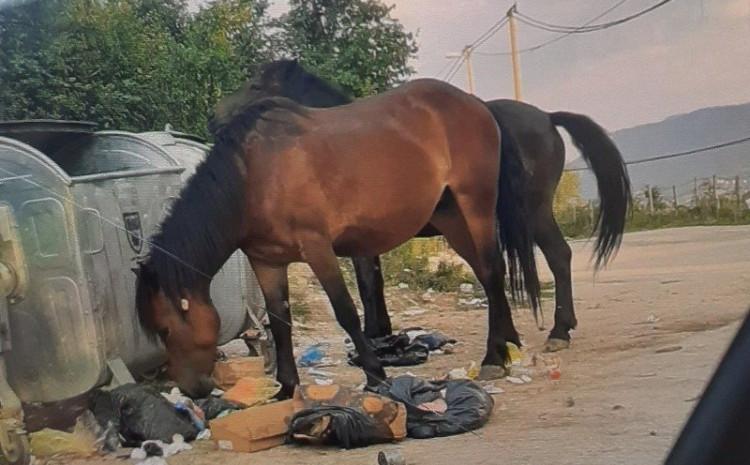 Divlji konji na Poljinama