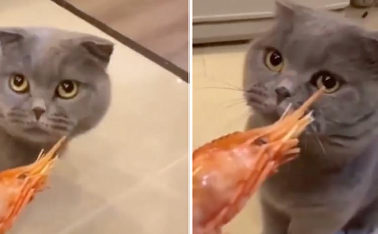Mačke slove za najveće obožavatelje ribe i morskih plodova