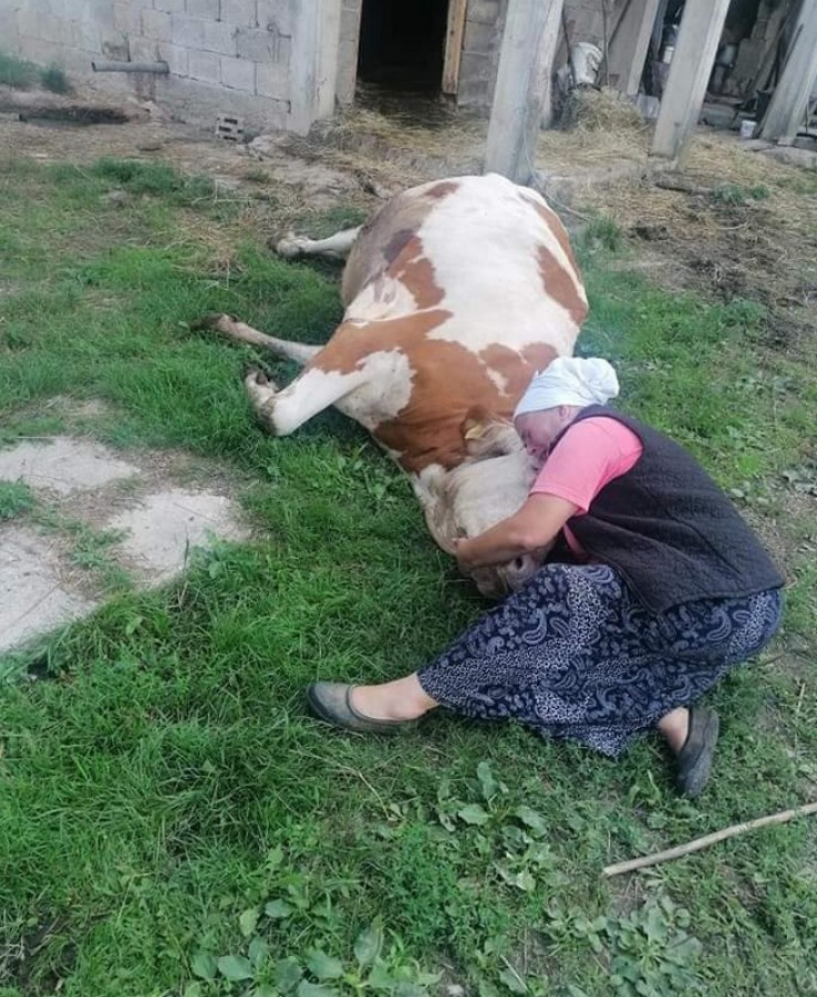 Nana Semka Šabić dobit će drugu kravu