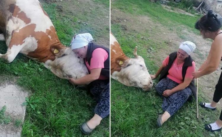 Nana Semka Šabić plače za uginulom kravom