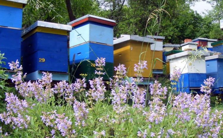 """PčelE se ponašaJU u """"dosluhu"""" sa prirodom"""
