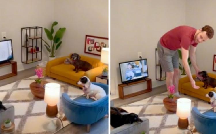 Psi dobili svoj prostor