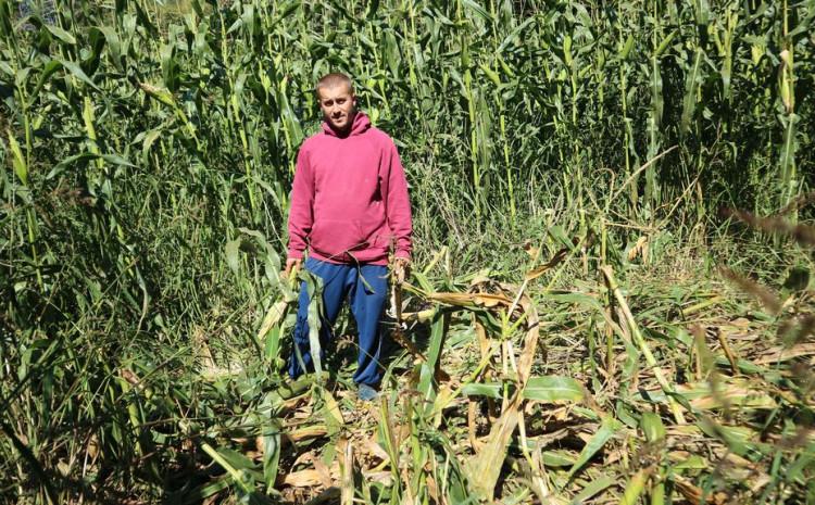Mevludin Avdić pokazuje uništen kukuruz