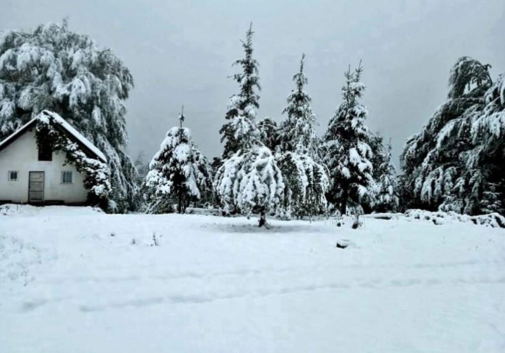 Drveće se savilo pod težinom bijelog porkivača